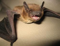 Nuisance Wildlife Photographs Pest Control Photos